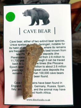 Cave Bear Digit #11
