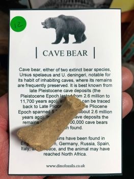 Cave Bear Digit #12