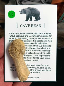 Cave Bear Digit #13