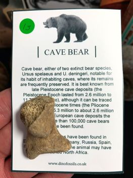 Cave Bear Digit #15
