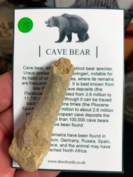 Cave Bear Digit #19