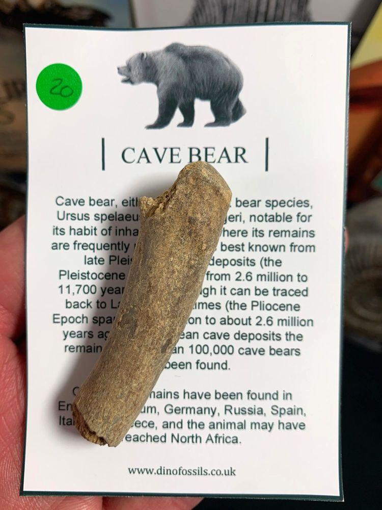 Cave Bear Digit #20