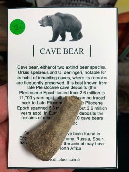 Cave Bear Digit #21