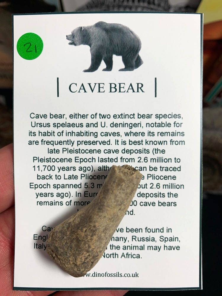 Cave Bear Digit #21