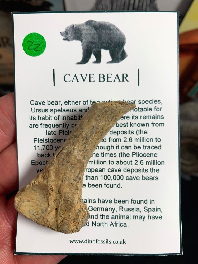 Cave Bear Digit #22