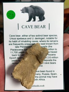 Cave Bear Digit #23