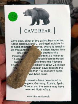 Cave Bear Digit #25