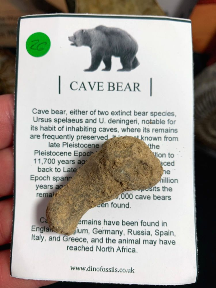 Cave Bear Digit #26