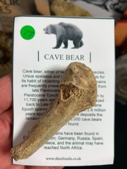 Cave Bear Digit #27
