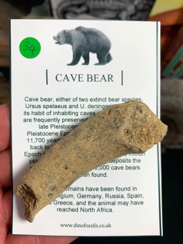Cave Bear Digit #34