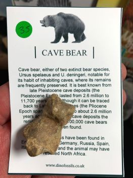 Cave Bear Digit #35