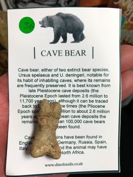 Cave Bear Digit #36