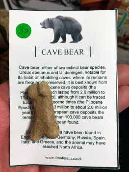 Cave Bear Digit #37