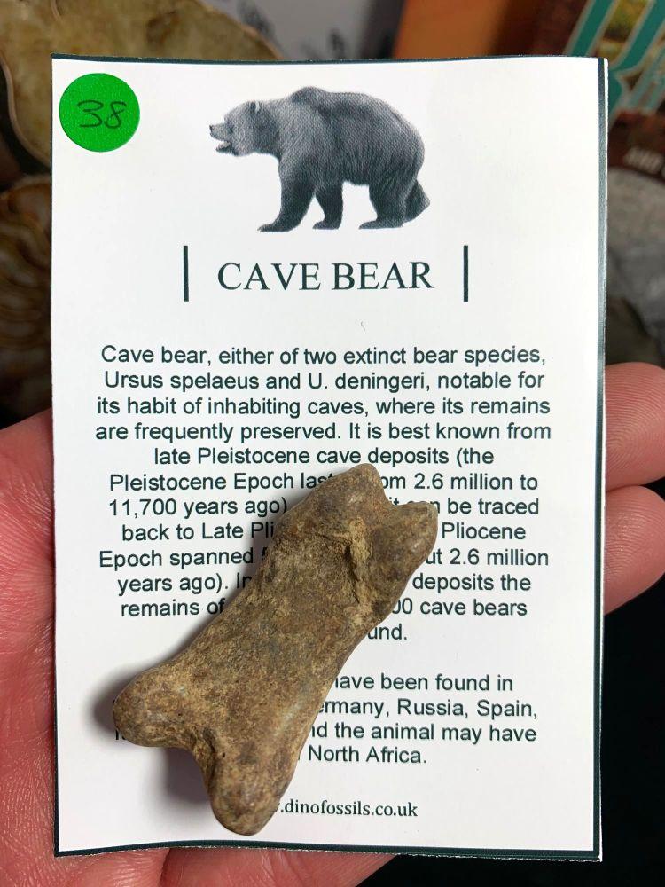 Cave Bear Digit #38