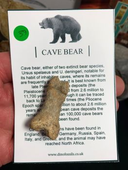 Cave Bear Digit #39