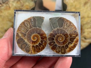 Cut & Polished Ammonite (pair) #03