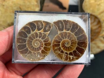 Cut & Polished Ammonite (pair) #04