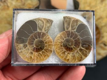 Cut & Polished Ammonite (pair) #07