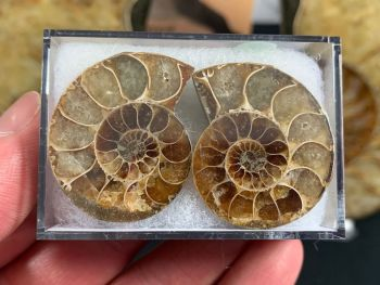Cut & Polished Ammonite (pair) #09