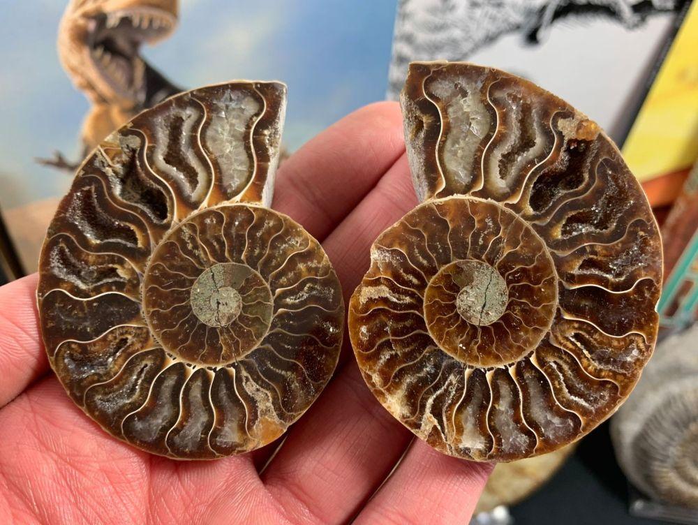 Cut & Polished Ammonite (pair) #L02