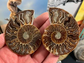 Cut & Polished Ammonite (pair) #L02