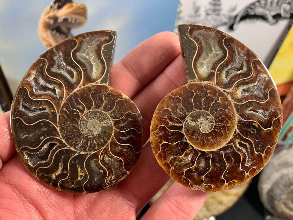 Cut & Polished Ammonite (pair) #L03