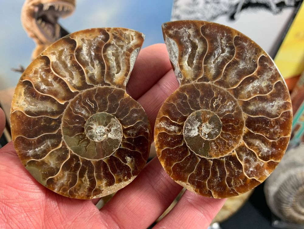 Cut & Polished Ammonite (pair) #L04