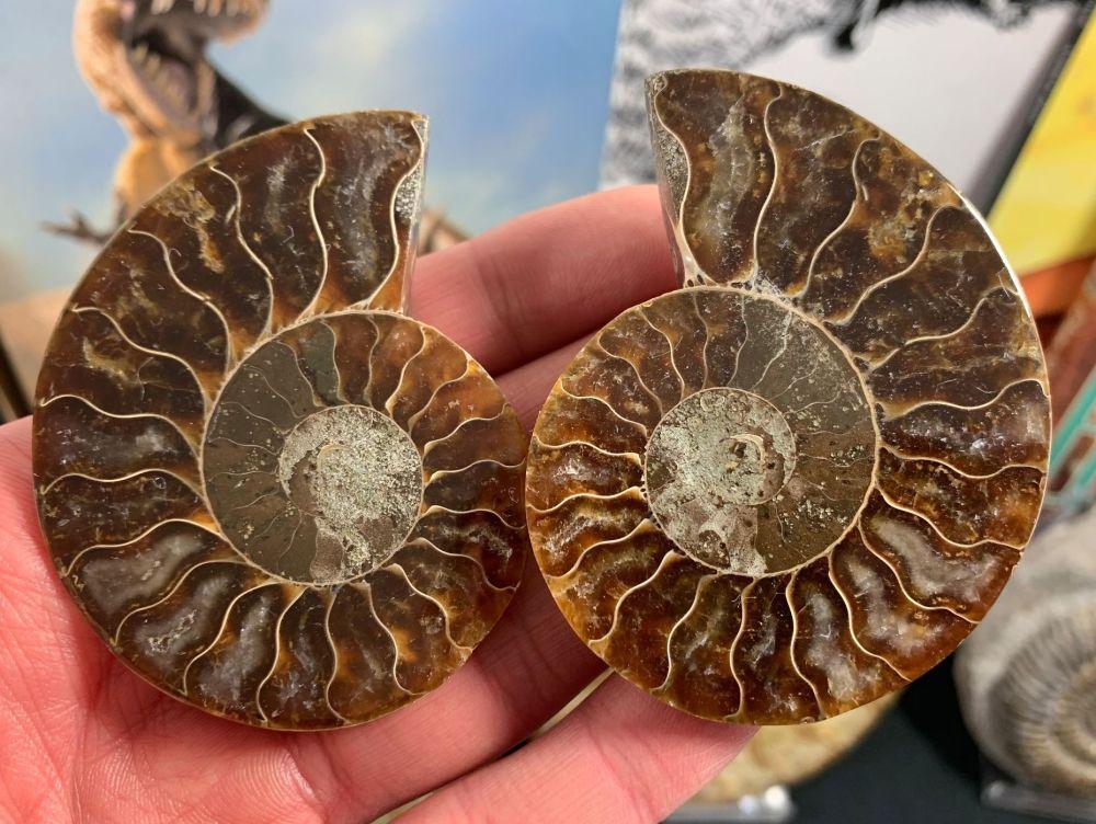 Cut & Polished Ammonite (pair) #L05