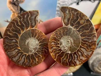 Cut & Polished Ammonite (pair) #L05