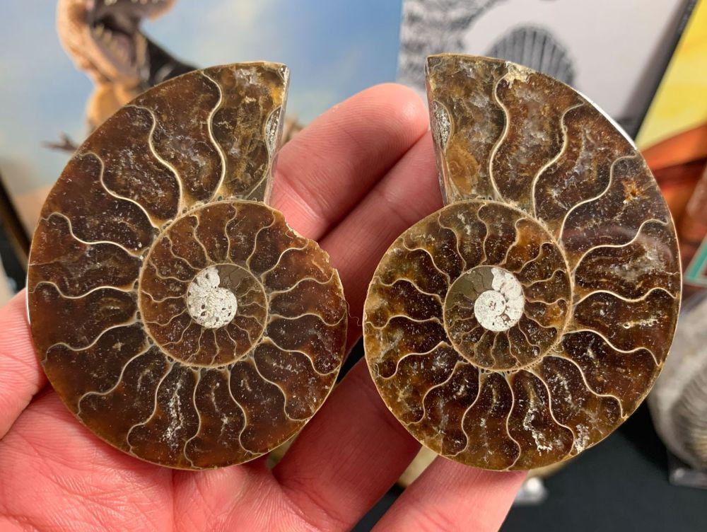 Cut & Polished Ammonite (pair) #L06