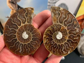 Cut & Polished Ammonite (pair) #L06
