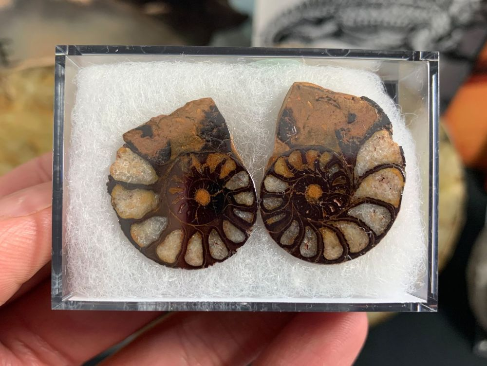 Cut & Polished Haematite Ammonite (pair) #06