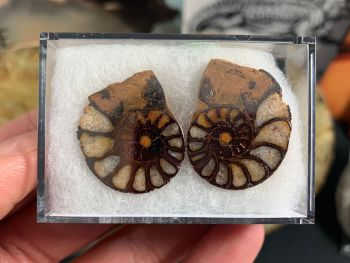 Cut & Polished Haematite Ammonite (pair) #06