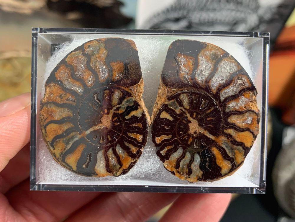 Cut & Polished Haematite Ammonite (pair) #07