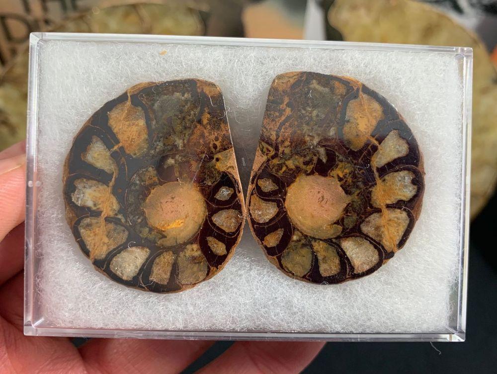 Cut & Polished Haematite Ammonite (pair) #13