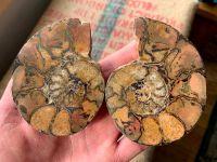Cut & Polished Haematite Ammonite (Pair) #L01