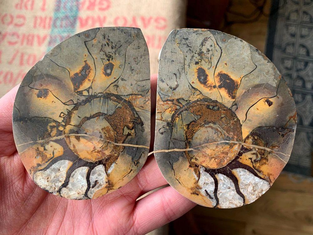 Cut & Polished Haematite Ammonite (Pair) #L03