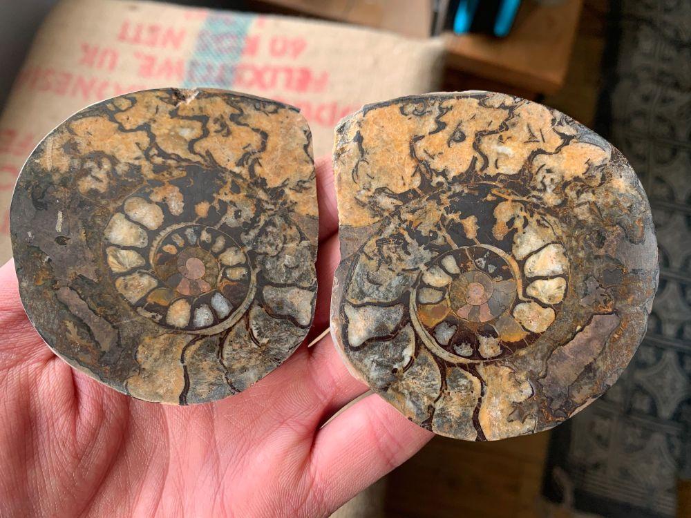 Cut & Polished Haematite Ammonite (Pair) #L04