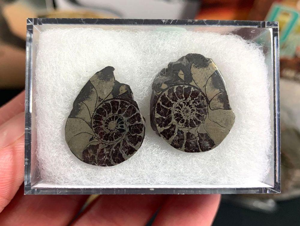Cut & Polished Pyrite Ammonite (pair) #01