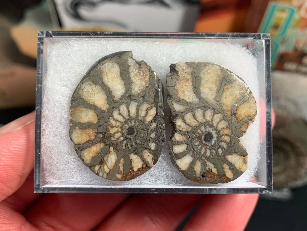 Cut & Polished Pyrite Ammonite (pair) #03