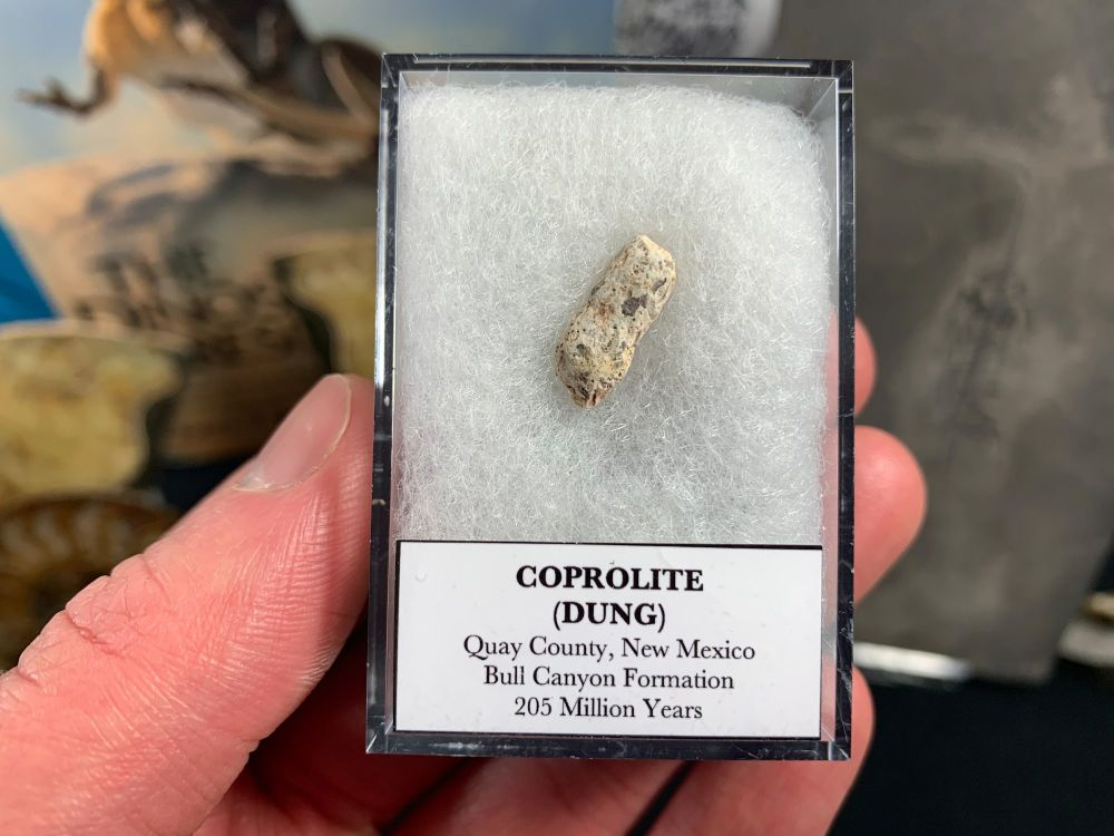 Coprolite (dung) with interesting inclusions, Bull Canyon Fm. #01