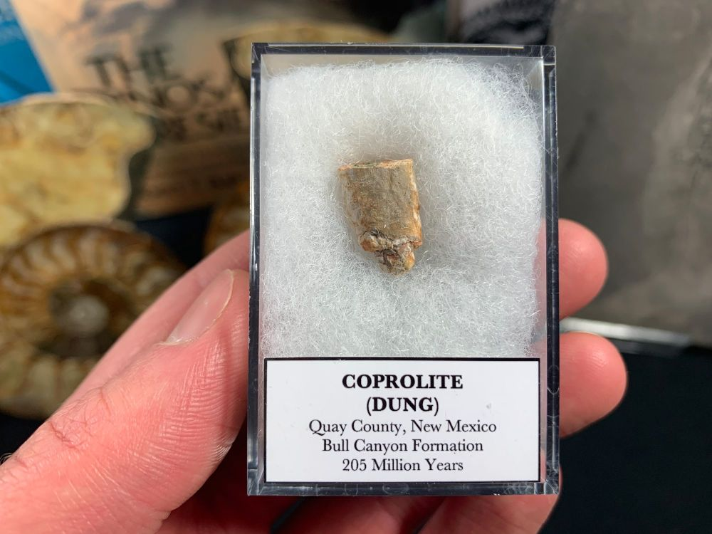 Coprolite (dung) with interesting inclusions, Bull Canyon Fm. #03
