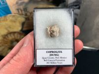 Coprolite (dung) with interesting inclusions, Bull Canyon Fm. #04