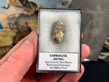 Coprolite (dung), Bull Canyon Fm. #09