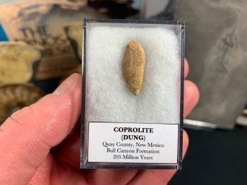 Coprolite (dung), Bull Canyon Fm. #11