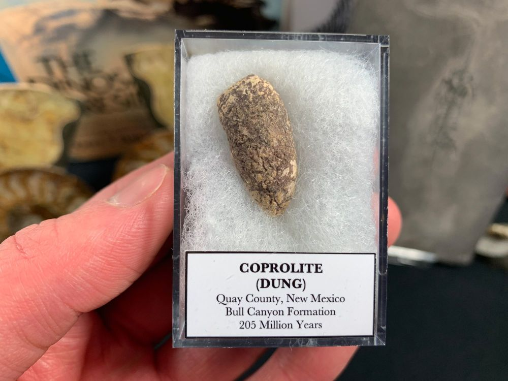 Coprolite (dung), Bull Canyon Fm. #12