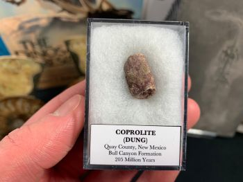Coprolite (dung), Bull Canyon Fm. #13