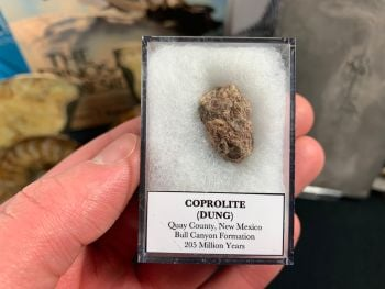Coprolite (dung), Bull Canyon Fm. #14