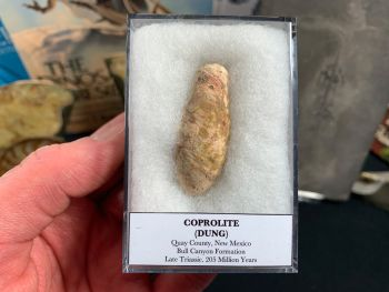 Large Coprolite (dung), Bull Canyon Fm. #01