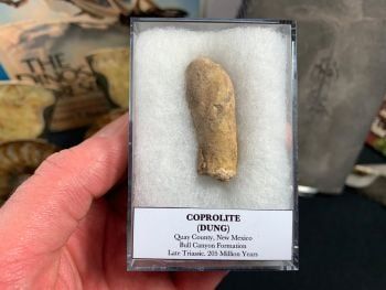 Large Coprolite (dung), Bull Canyon Fm. #02